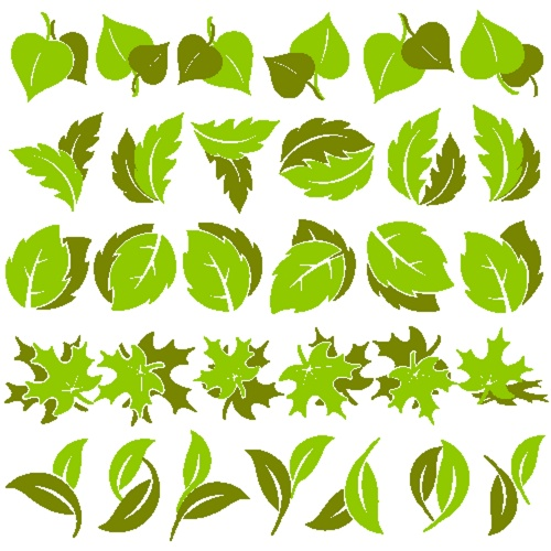 Stock: Leaves in Vector