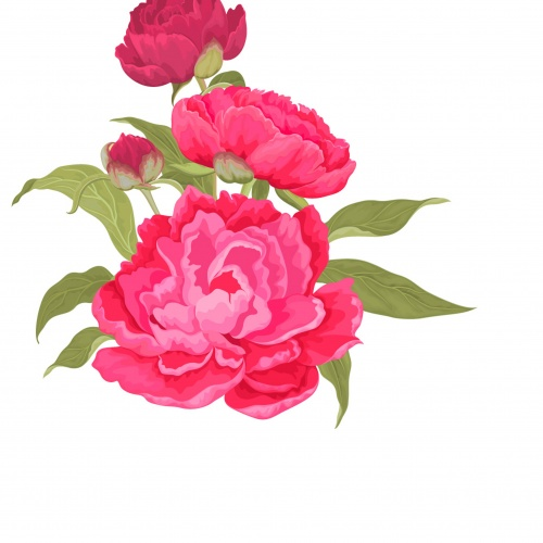 Background and frame with peonies