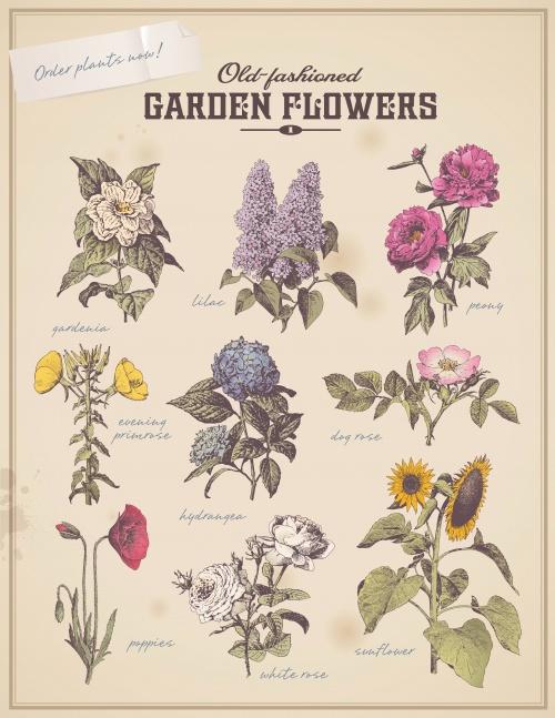 Садовые, винтажные элементы дизайна в векторе / Garden, vintage design elements in the vector